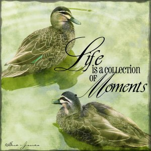 Life-moments---web