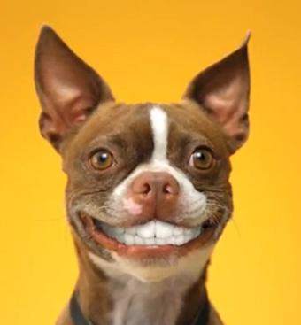 dog-smile-2.jpg
