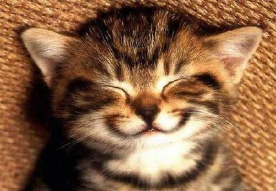 smile2520cat